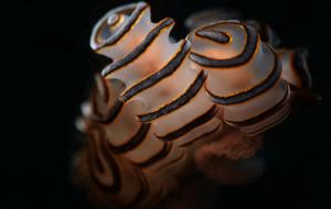 oceanpixel